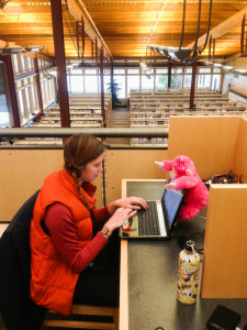 Bozeman Public Library with a pink monkey