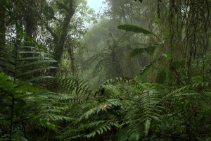 Ecuador-Cloud_forest
