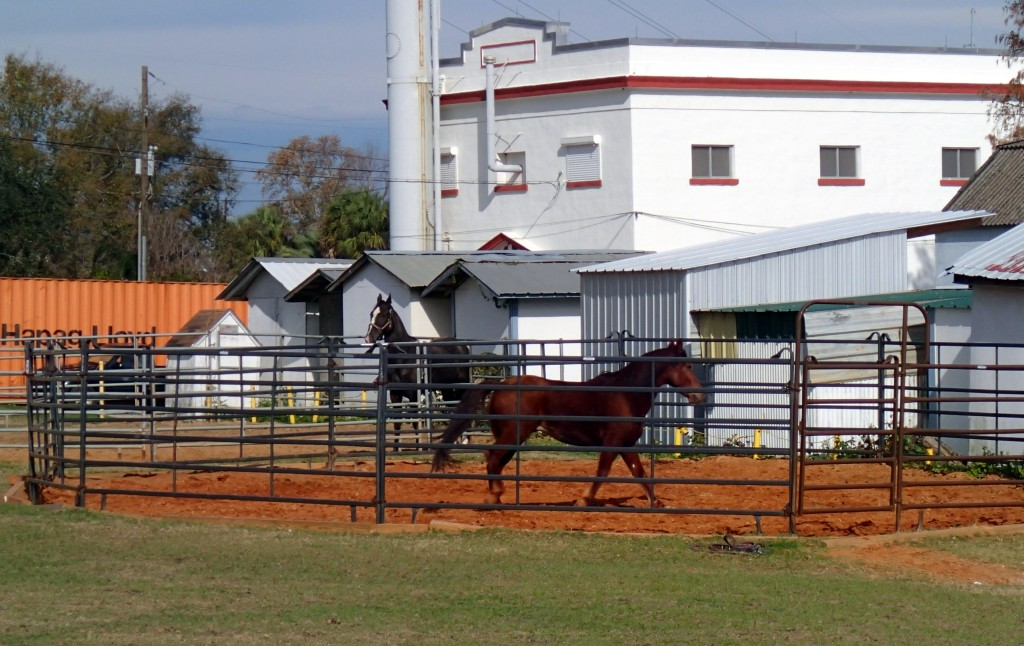 Horse Stables Along the Trail