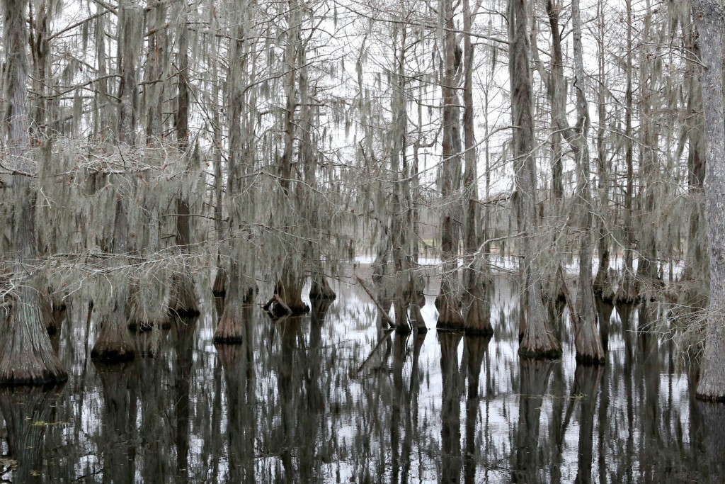 An eerie stillness in the swamp