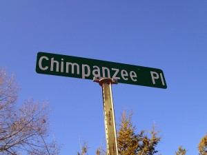 Chimpanzee Place